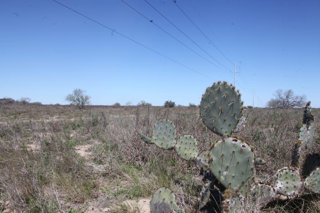 muertos frontera sur de EE. UU.