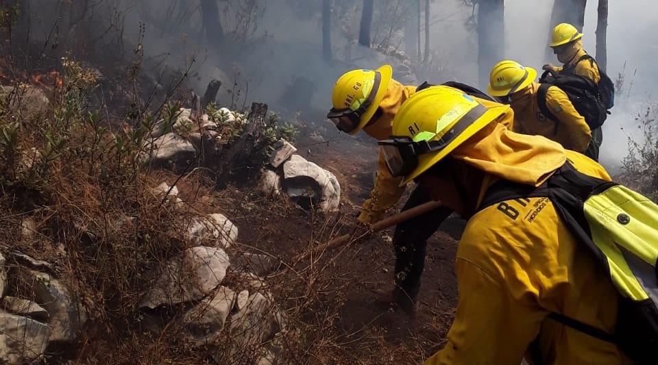 Incendios forestales no dan tregua y arrasan bosques en cinco departamentos