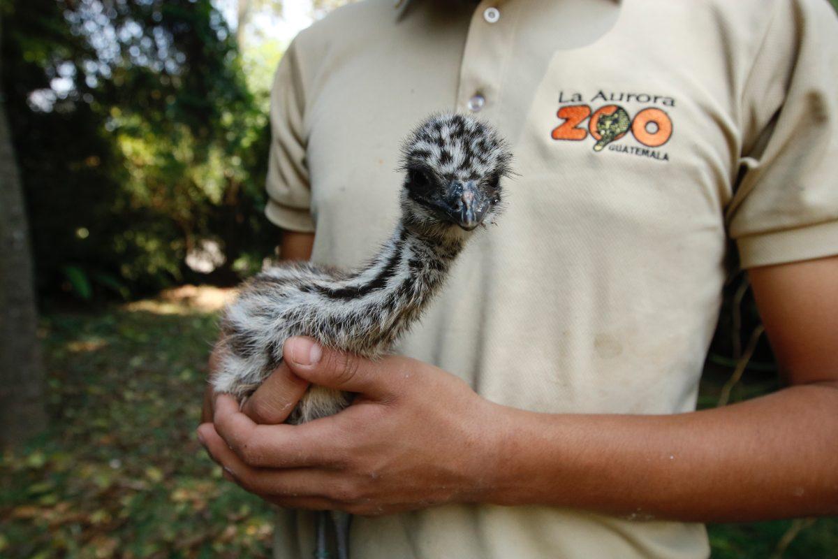 Fotogalería: nuevos integrantes en la familia del Zoológico La Aurora