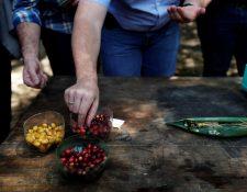 Los productores de café guatemaltecos, la cuarta fuerza de exportación del país, se enfrentan al reto del cambio climático, el uso de los recursos y la economía con nuevas oportunidades de negocio. (Foto Prensa Libre: EFE)
