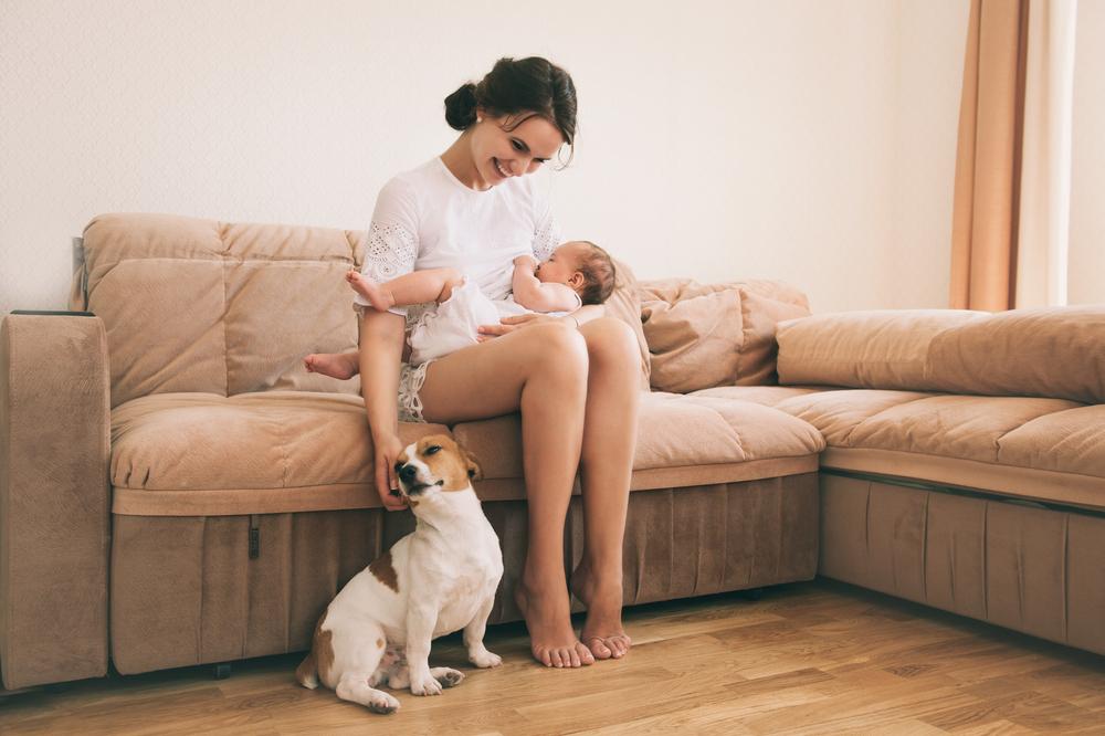 Mascotas y bebés: recomendaciones para una buena convivencia