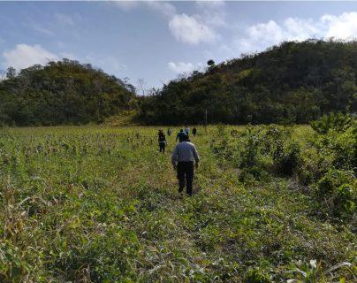 El terreno de gran extensión tiene diversas plantaciones. (Foto Prensa Libre: MP)
