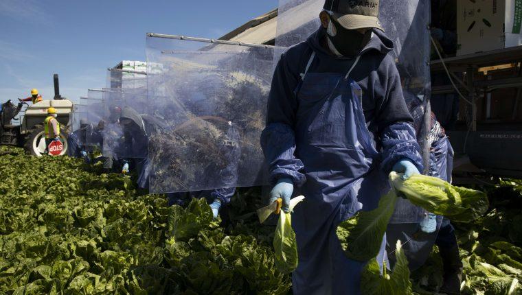 La mejora en el envío de remesas en Guatemala en marzo se fundamenta en parte por la recuperación del empleo hispano en Estados Unidos, según las autoridades. (Foto Prensa Libre: Hemeroteca)