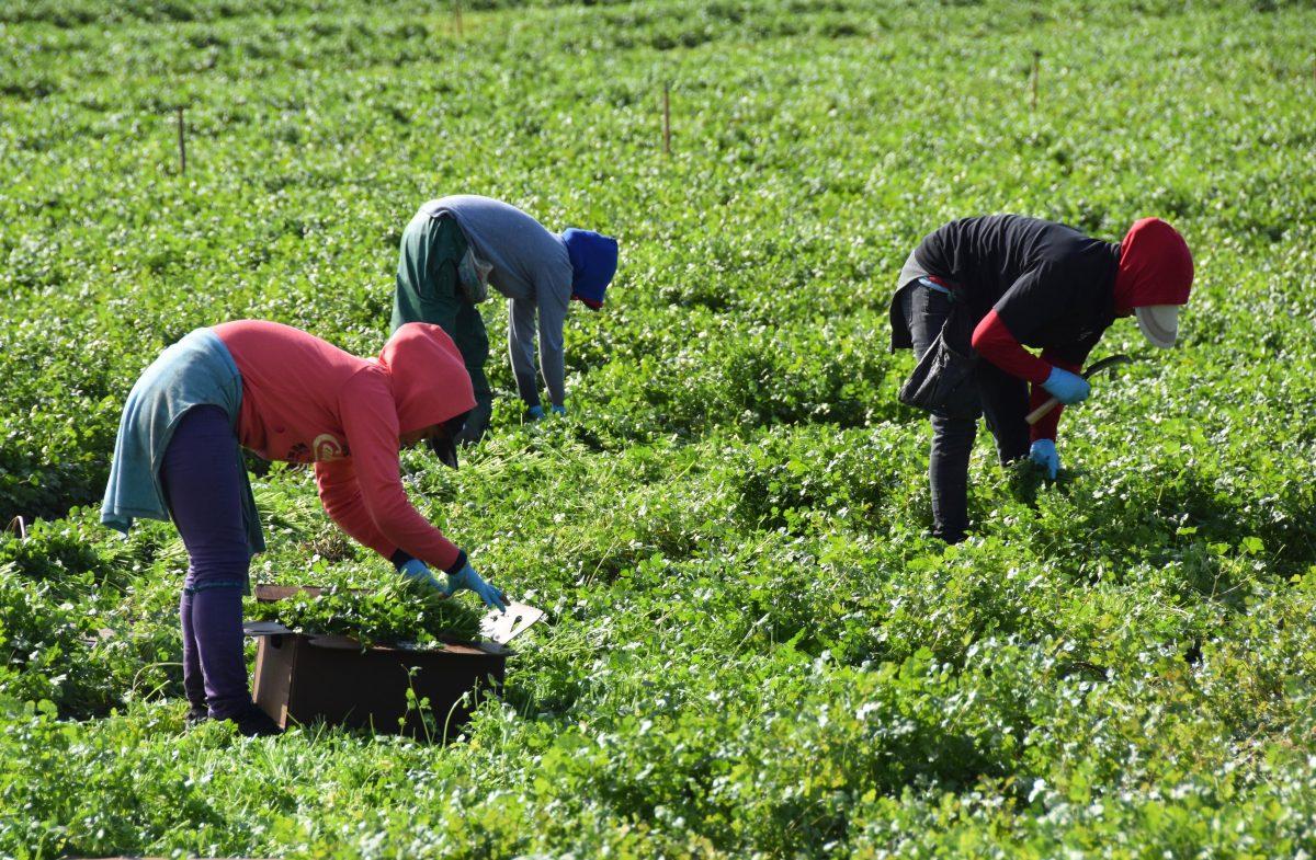Suben remesas en enero: Empleo hispano y políticas migratorias favorecen a Guatemala