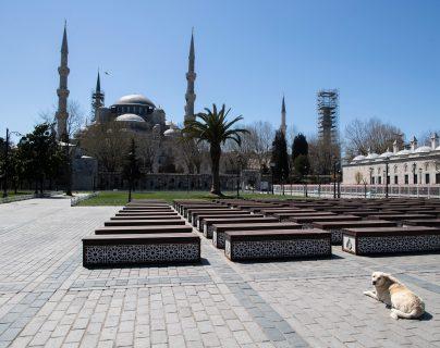 Los perros se quedan en las calles desiertas de Estambul y de muchas ciudades. Foto Prensa Libre: EFE