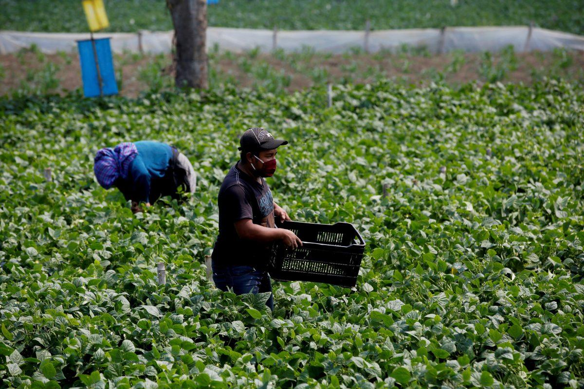 ¿Qué cambiará en el comercio entre Guatemala y Reino Unido tras el brexit?
