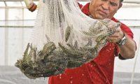 MEX595. CIUDAD DE MÉXICO (MÉXICO), 30/04/2020.- Fotografía cedida por la Secretaría de Agricultura y Desarrollo Rural (Sader) que muestra un pescador de Camarón en aguas marinas mexicanas. Para mantener una producción sustentable del camarón, moderar su captura y proteger su ciclo de vida, el Gobierno de México anunció este jueves el inicio de la veda para todas las especies de aguas marinas y sistemas lagunarios estuarinos del Golfo de México y Mar Caribe para 2020. EFE/SADER/SOLO USO EDITORIAL