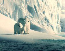 Fotograma del documental Nuestro Planeta. (Foto Prensa Libre: Netflix)