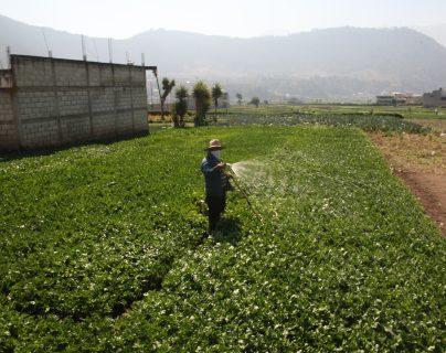 Agricultores de Xela trabajan en medio de la crisis sanitaria por el covid-19. (Foto Prensa Libre: María Longo)