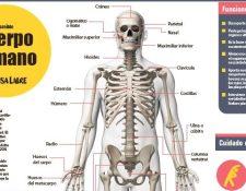 Las láminas que se publicarán en la edición impresa de Prensa Libre son tamaño póster e incluyen los principales sistemas del cuerpo humano. Foto Prensa Libre.