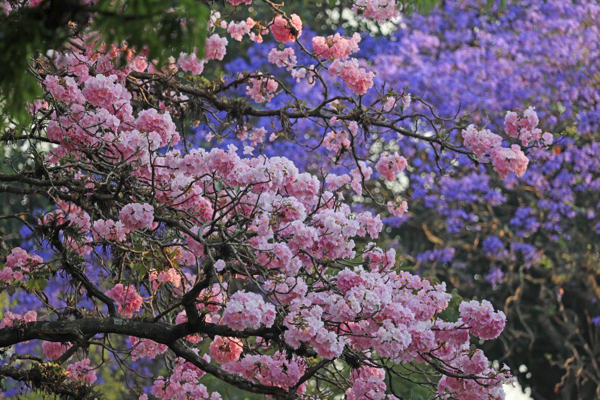 Fotogalería: el color de las flores brinda esperanza en un tiempo de cuarentena por el Coronavirus