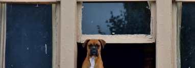 Al ser miembros importante de los hogares, los perros deben tener garantizado un espacio higiénico y lleno de entretención. (Foto Prensa Libre: Unsplash)