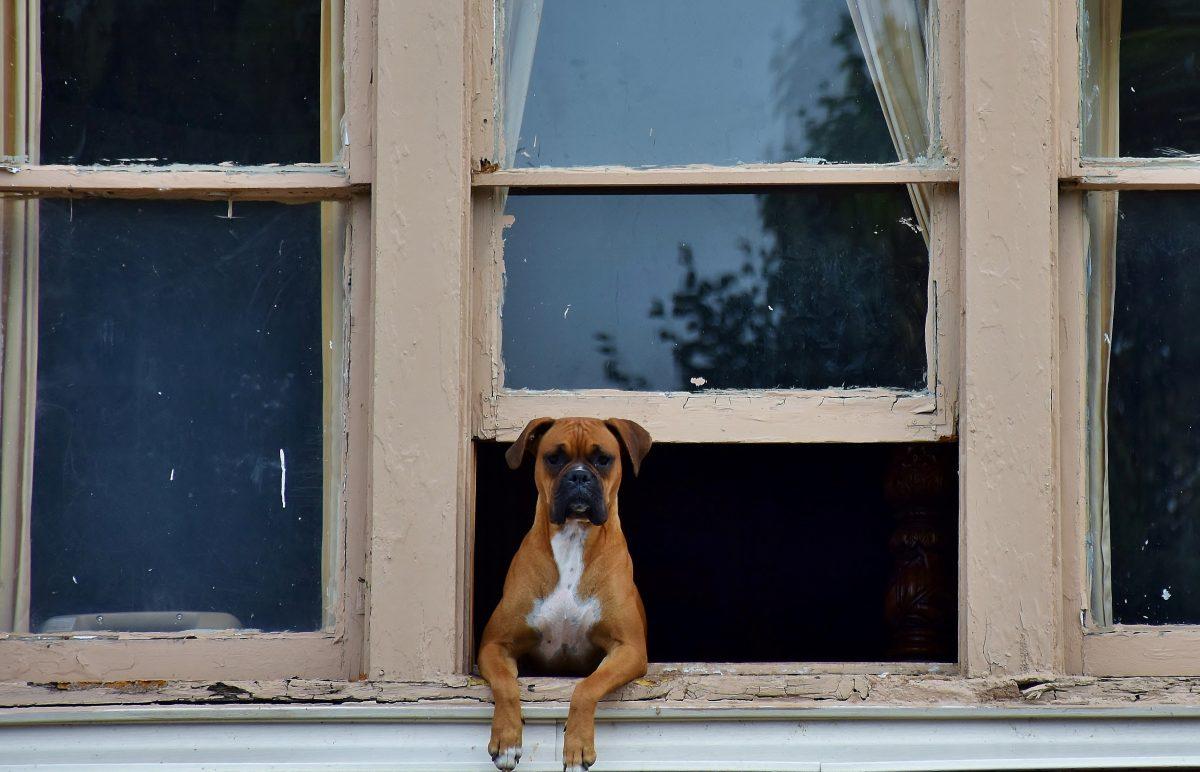 Recomendaciones para el bienestar de los perros en tiempo de aislamiento