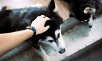 La Organización Mundial de la Salud (OMS) indica que hasta el momento no hay pruebas  que señalen que animales domésticos como perros y gatos puedan infectarse de covid-19. (Foto Prensa Libre: Servicios)