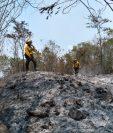 """Los incendios forestales dejan daños incalculables en los bosques, donde la flora y fauna se ven """"seriamente"""" afectadas. (Foto Prensa Libre: Conap)"""
