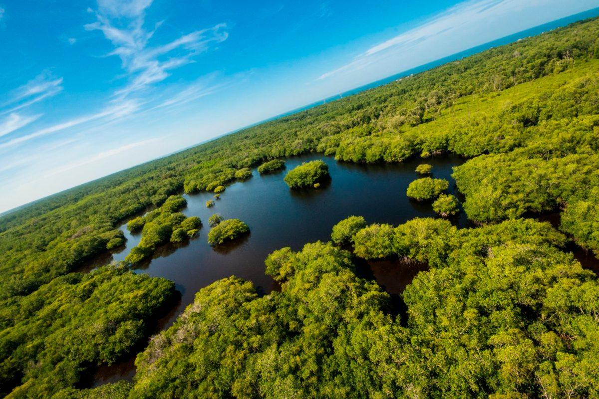 En medio de la crisis por el covid-19, se celebra el Día de la Tierra y esto recomiendan las autoridades