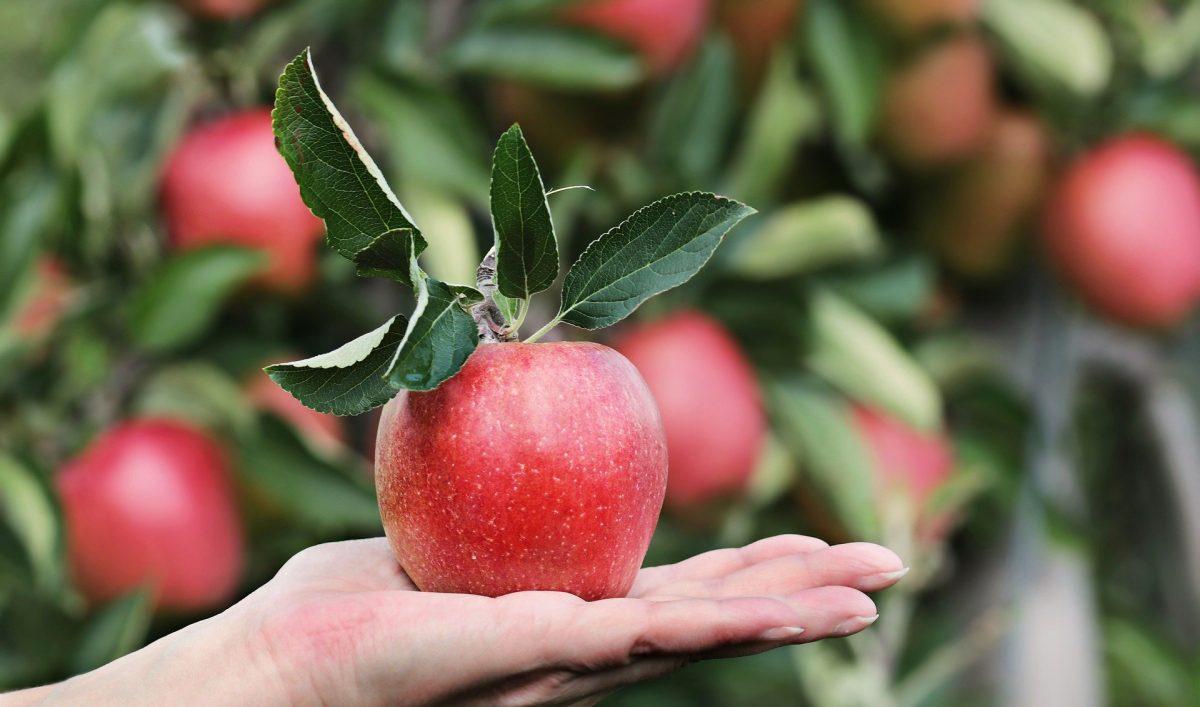 Siembre árboles frutales en macetas
