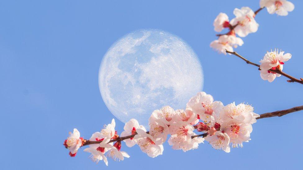 """Cómo es la """"Luna de Flor"""", la última superluna del año que se puede ver esta semana"""