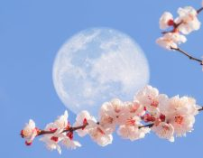 La luna de flor es símbolo de la primavera. GETTY IMAGES
