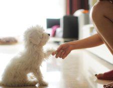 ¡Hello, perrito! ¿Has tenido que interactuar con mascotas o bebés en un idioma del que no eres nativo? ¿Cómo te sentiste?