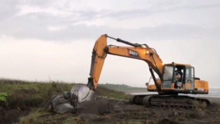 Los comunitarios utilizaron una retroexcavadora para enterrar la ballena. (Foto Prensa Libre: Victoria Ruiz).