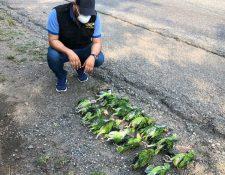 El tráfico de aves causa la muerte de 8 de cada 10 ejemplares, según el Conap. (Foto Prensa Libre: Dony Stewart)