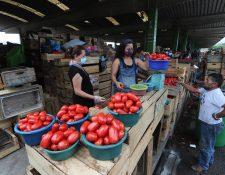 El tomate es uno de los productos que registra comportamiento al alza en el mercado por efecto estacional según los reportes de Diplan. (Foto Prensa Libre: Hemeroteca)