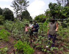María Adelaida Escobar Funes y sus hijas le dedican gran parte de su tiempo al cuidado de su huerto, en el cantón Concepción Ocosito, Retalhuleu. (Foto Prensa Libre: Cortesía)