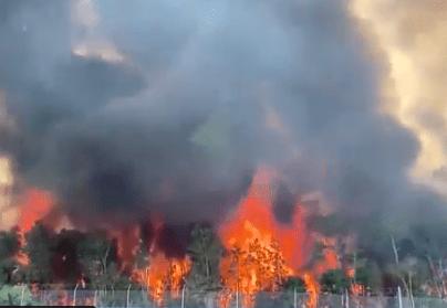 Se esperan miles de evacuaciones en Florida, por los voraces incendios. (Foto: Twitter/@FDACS )