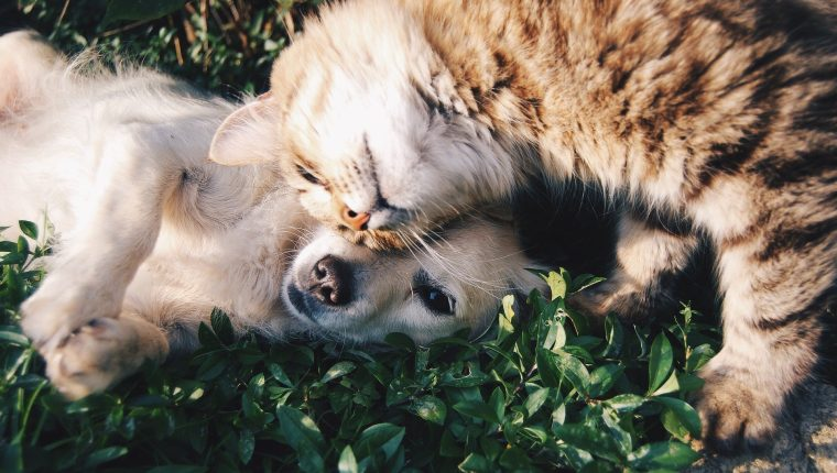 Compartir con una mascota puede traer beneficios emocionales. (Foto Prensa Libre: Pixabay)