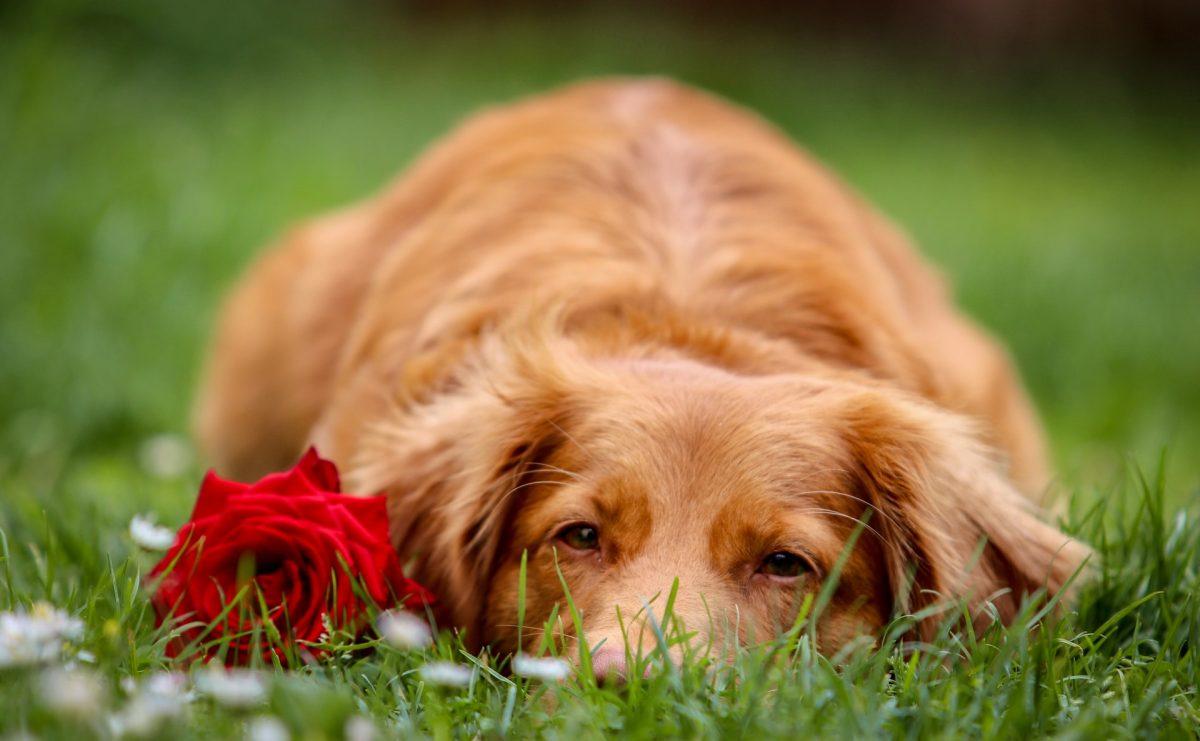 Eutanasia en mascotas: un adiós cargado de amor