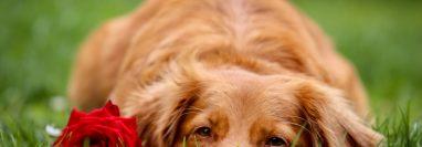 Todas las mascotas merecen una vida digna y sin sufrimiento hasta el final. (Foto Prensa Libre: Laula Co en Unsplash).