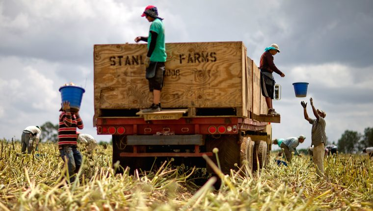 Una gran parte de las personas que han perdido empleos en EE. UU. son migrantes. (Foto Prensa Libre: AFP)