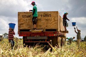 Coronavirus: remesas se desaceleran y deportaciones bajan en Guatemala