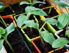 Elaborar un huerto en casa le traerá beneficios alimenticios, emocionales y económicos. (Foto Prensa Libre: Pixabay)