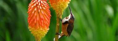La visita de aves en el jardín es beneficioso promover la conservación ambiental. (Foto Prensa Libre: Unsplash)