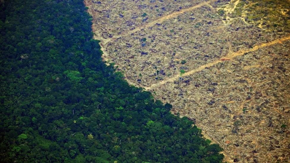 Deforestación: los 10 países que perdieron más bosque virgen en el mundo (y 5 están en América Latina)