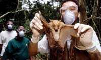 Investigadores que estudian el ébola tomaron muestras de murciélagos salvajes, que se cree que fueron la fuente de la html5-dom-document-internal-entity1-quot-endpropagaciónhtml5-dom-document-internal-entity1-quot-end en humanos.