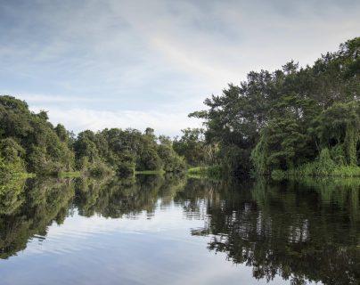 Algunos países han implementado leyes para la protección ambiental en medio de la pandemia. (Foto Prensa Libre: EFE)