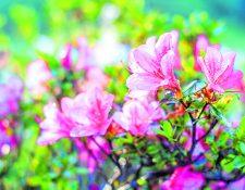 La jardinería también puede ir más allá y ser sostenible.  (Foto Prensa Libre: Shutterstock)
