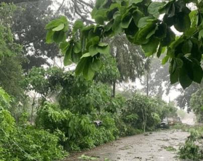 Varios árboles cayeron debido a los fuertes vientos de este domingo por la tarde. (Foto Prensa Libre: Alex Coyoy)