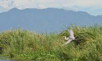 El Área de Protección Especial Manchón Huamuchal es el hogar de variedad de aves. (Foto Prensa Libre: Conap)