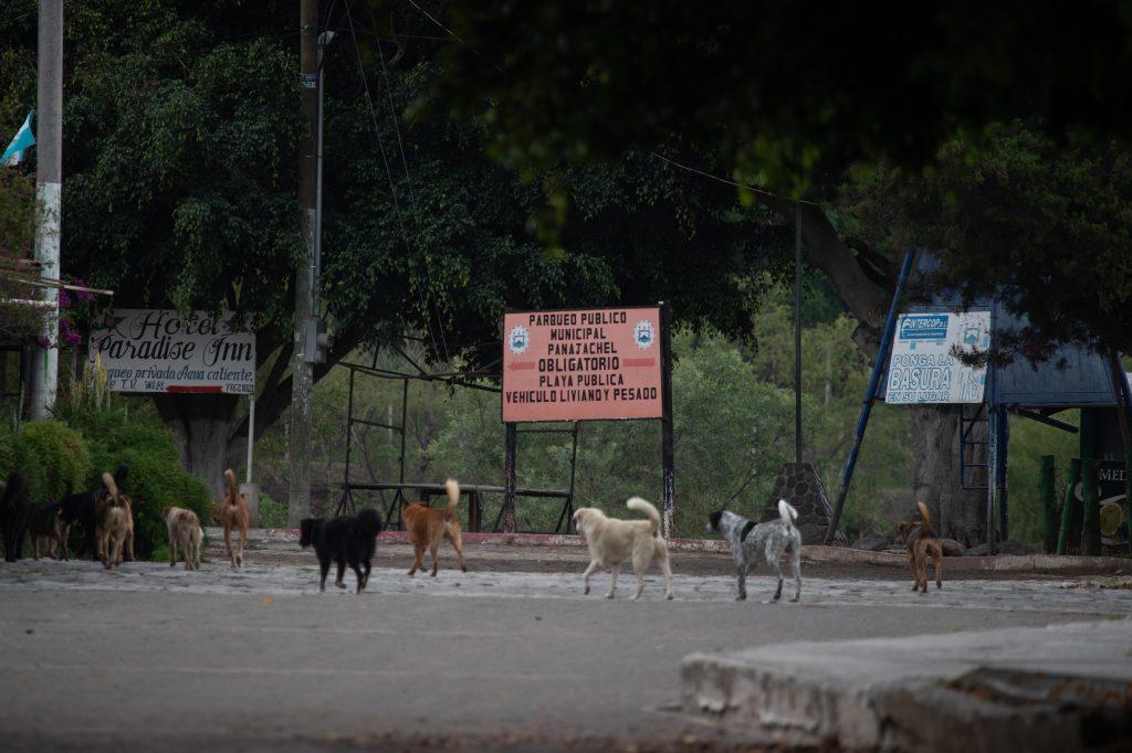 Un grupo de perros recorre las calles cercanas al Lago de Atitlán después del toque de queda. Foto Prensa Libre: Óscar Rivas