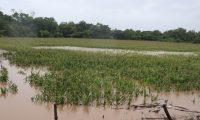 El exceso de lluvias provoca el aparecimiento de plagas en la agricultura y el Maga identifica entre 10 a 15 en la actualidad. (Foto Prensa Libre: Hemeroteca)