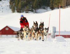 Después de una travesía, el guía y los 24 perros ya están en  Noruega. (Foto Prensa Libre: Ole-Johnny Myhrvold/ http://berserkkennel.com)