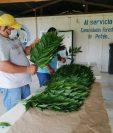 La hoja de xate se ha empezado a comercializar luego de las restricciones por el coronavirus. (Foto Prensa Libre: Dony Stewart)