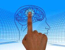 Expertos señalan que el cerebro es el órgano más importante. (Foto Prensa Libre: Pixabay)