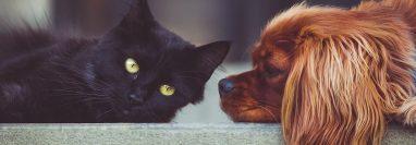 La etapa reproductiva de los perros y gatos varía según su raza, edad y estado nutricional. (Foto Prensa Libre: Pixabay).