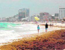 Vista general del sargazo en una playa de Cancún, México. (Foto Prensa Libre: EFE/Archivo).