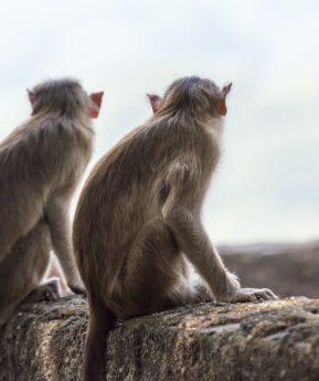 ¿Se pueden investigar vacunas contra la COVID-19 en la época del animalismo?